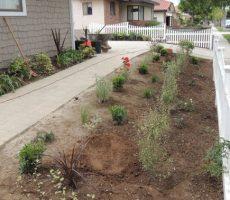 Front walkway plantings