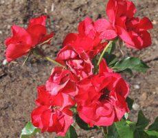plantings-10
