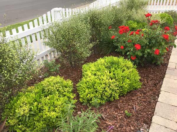 Front yard sample